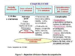 Aspecos clínicos e fases da coqueluche
