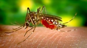 mosquito-zika-800