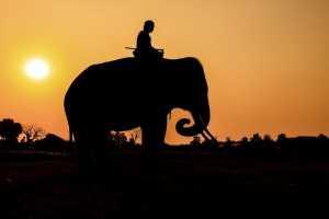 viagem_ferias_viajante_africa_elefante_ss