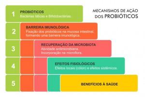 LACTOBACILOS12