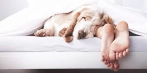 cachorro-dormir-cama