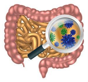 probiotics-in-the-gut