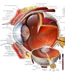 olho-humano-39