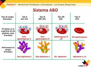 variaciones-fenotpicas-y-genotpicas-grupos-sanguneos-17-638