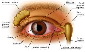 aaad8e59bc537 Cuidados especiais com os olhos