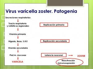 varicela-zoster-3-638