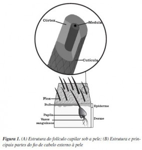 a19fig01