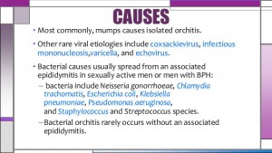 orchitis-epididymitis-6-638