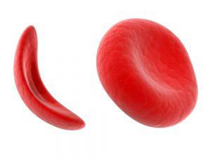 hemoglobinas_credito_sebastian_kaulitzki_shutterstock